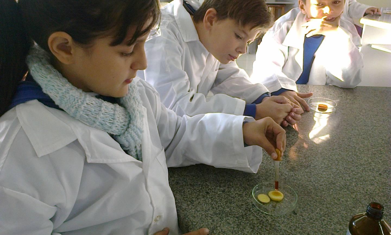 Experiência em Laboratório revela a importância dos amidos na alimentação