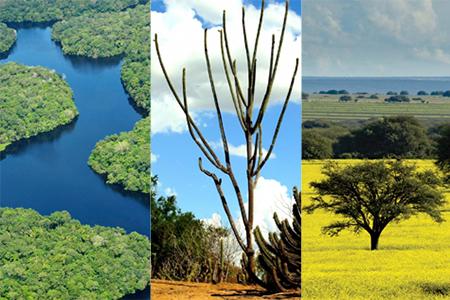 Campanha da Fraternidade evoca a beleza e a diversidade dos biomas brasileiros