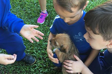 English Club: Crianças arrecadam donativos para ONG Amor Animal